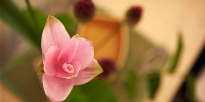 Kado – The Way of Flowers